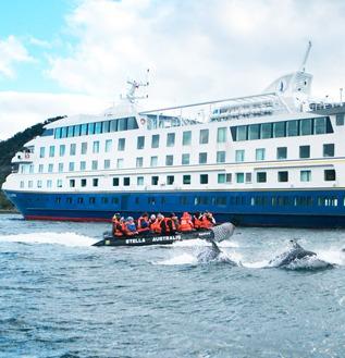 cruzeiro australis