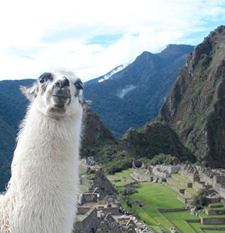 Machu Pichu Top Brasil Turismo