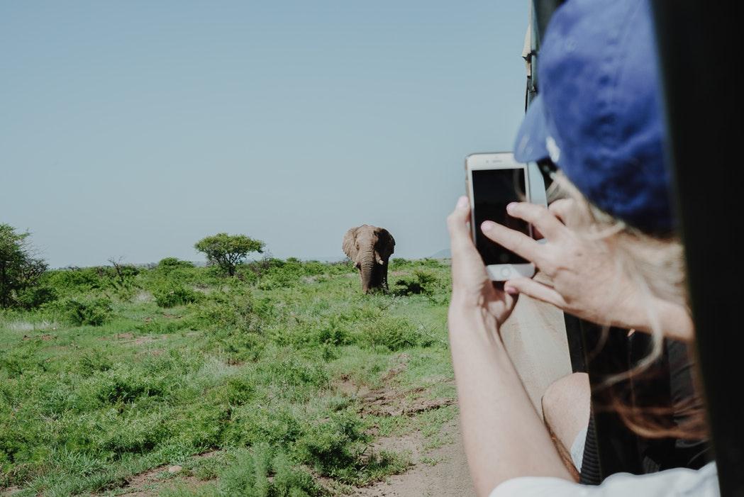 Mulher tirando foto de um elefante no safári de sua viagem para a África do Sul